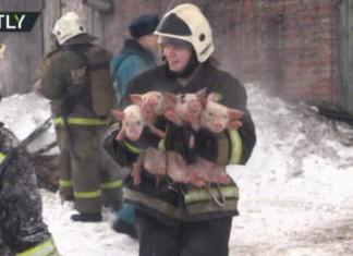 Feuerwehrmann rettet Schweinchen