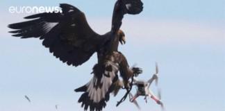 Drohnen Adler