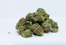 Cannabis Buds