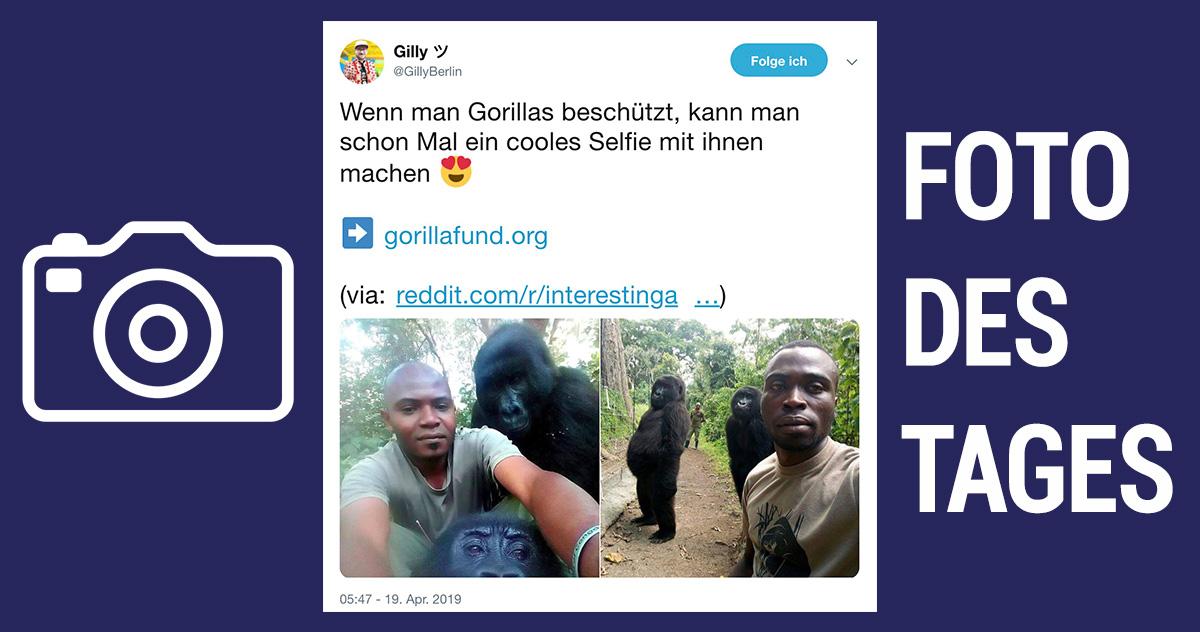 Foto des Tages: Gorilla Selfie