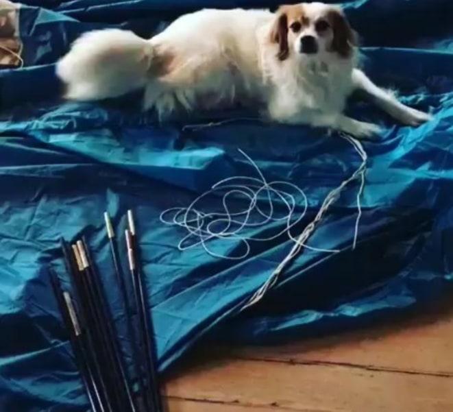 Dieser Horror passierte uns letztes Jahr: 1 Tag vor Abreise feststellen dass wesentliche Bestandteile unseres Zeltes defekt waren. Lauras Hund war es egal. Uns bewahrten dann Gaffa-Tape und Schokolade vor einem Nervenzusammenbruch.