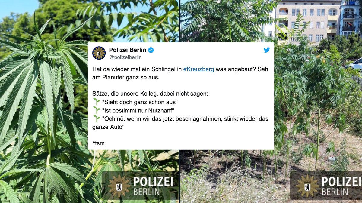 Polizei macht in Kreuzberg wieder auf Ganja Farmer